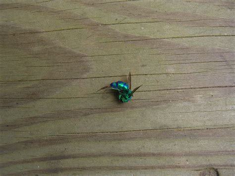 Basement Flies by Bug Of The Day The Reluctant Pioneer