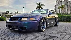 Used Ford Mustang SVT Cobra for Sale in West Palm Beach, FL - CarGurus