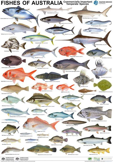 fish names fish names  fish tank maintenance