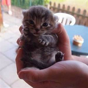37 best images about Happy Kitties! on Pinterest | Cats ...