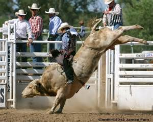 PBR Riding Professional Bull Riders