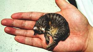 Smallest Cat Ever Recorded   www.imgkid.com - The Image ...
