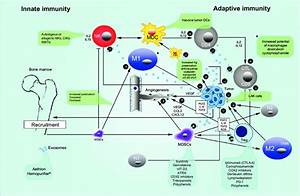 Innate And Adaptive Immunity In Cancer And Therapeutic