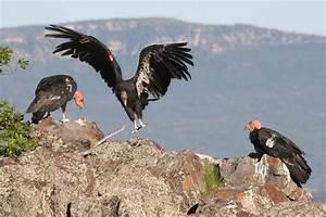 Backcountry Utah U0026 39 S Outdoor Adventure Journal  See