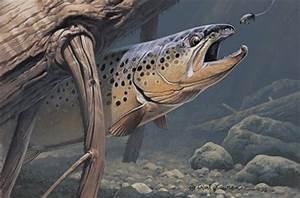 Trout Wallpaper | Trout Skin Wallpaper , Fly Fishing ...
