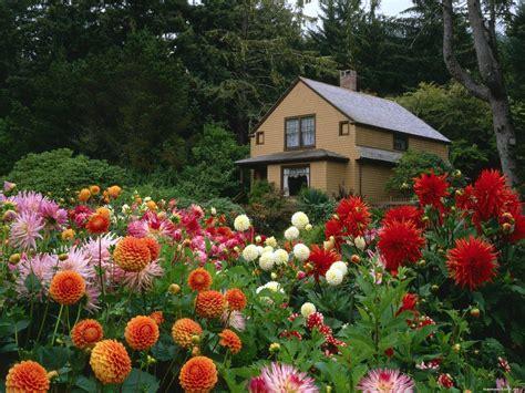winter flowers  gardens  north india acegardener