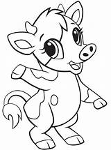 Cow Coloring Printable Animals Categories sketch template