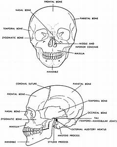 Images 04. Skeletal System | Basic Human Anatomy