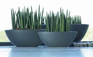 Große übertöpfe Für Zimmerpflanzen : den richtigen blumentopf finden tipps von hornbach ~ Bigdaddyawards.com Haus und Dekorationen