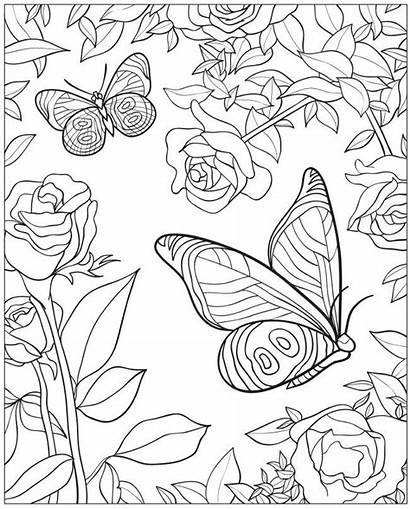 Coloring Books Pages Butterfly Flowers Butterflies Bing