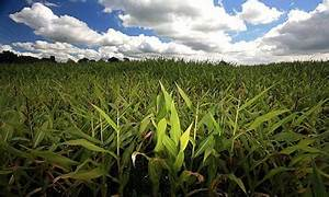 Growing reliance on fewer crops will increase risk of ...