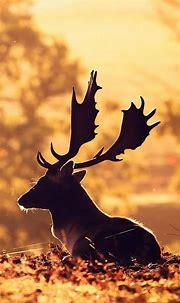 1080x1920 Deer Iphone 7,6s,6 Plus, Pixel xl ,One Plus 3,3t ...