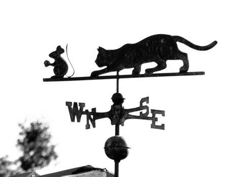 cat vane weather mouse domain chasing publicdomainpictures