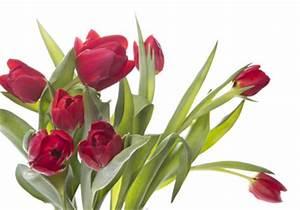 Blumen Günstig Verschicken : tulpen g nstig kaufen und verschicken auf ~ Frokenaadalensverden.com Haus und Dekorationen
