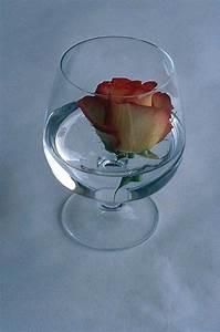 Rose In Glas : flowers free pictures valentine 39 s day roses tulips ~ Frokenaadalensverden.com Haus und Dekorationen