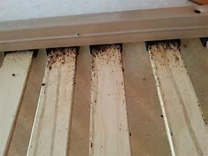 methodes de detection et de traitement des punaises de lit With punaise de parquet