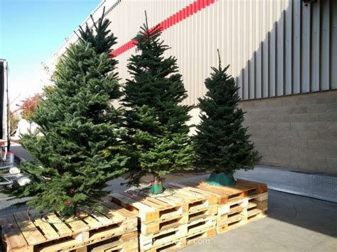 when does costco sell christmas trees noble fir fresh cut tree 2016