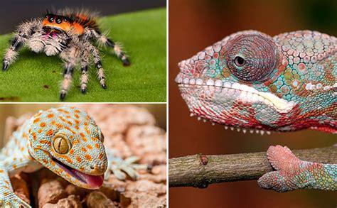 3 padomi par eksotisko mīļdzīvnieku komfortu - Jauns.lv