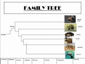 Elephant Evolution: Family Tree
