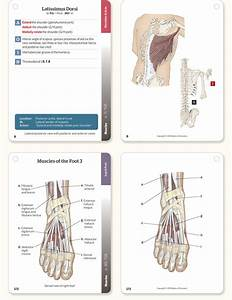 Trail Guide To The Body Flashcards  Volume 2  6th Edition