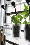 20 Ways to Start an Indoor Herb Garden | Brit + Co indoor herb garden