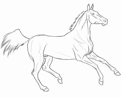 Horse Coloring Pages Race Lineart Teke Akhal
