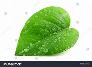 Green Leaf Water Dropletscloseup Stock Photo 54234244 ...