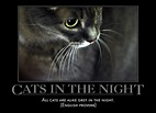 Go Proverbs! Proverb Laboratory: Poster: Cats in the Night