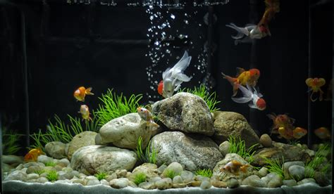 images for gt cool goldfish tank ideas for the kid goldfish tank goldfish and