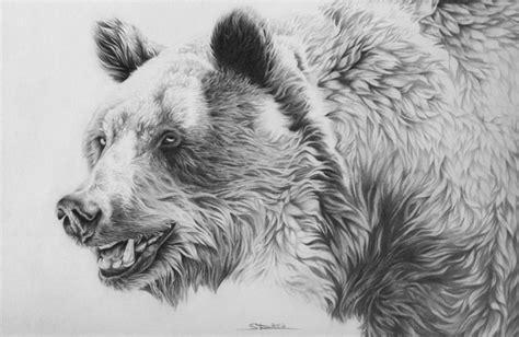 bear drawings showcase