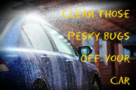 how to clean bugs car