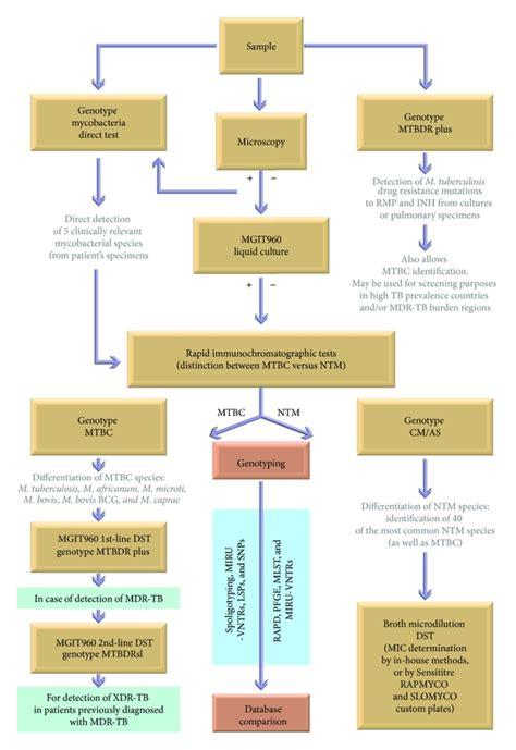current methods   molecular typing  mycobacterium tuberculosis   mycobacteria