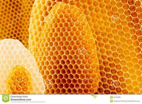 Imagem Do Favo De Mel Background Imagem de Stock Imagem