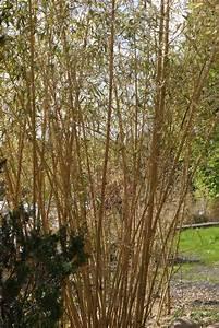 Bambus Im Winter : bambussch den nach dem harten winter 2012 bambus pflege bambus und pflanzenshop ~ Frokenaadalensverden.com Haus und Dekorationen