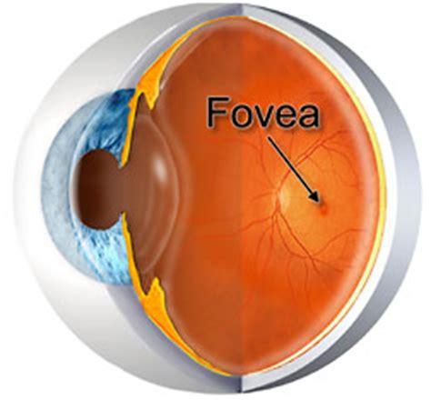 understanding  eye anatomy health life media