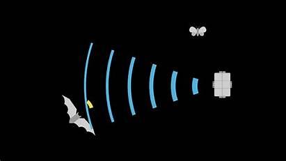 Bat Deterrent Bats System Wind Turbine Turbines