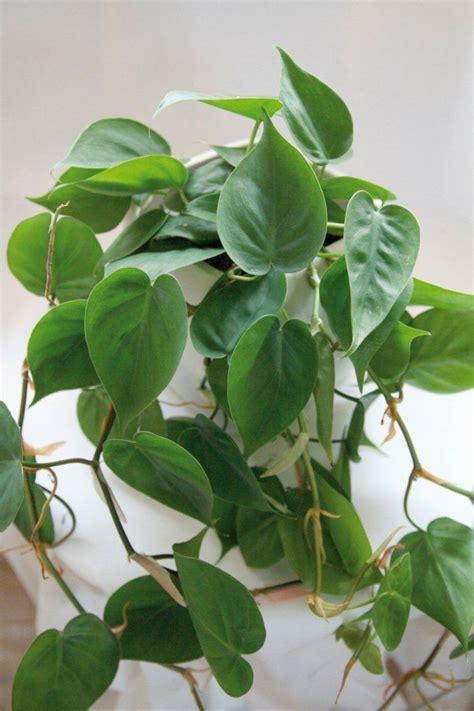 pflanzen für wohnung 10 schattenpflanzen f 252 r die dunkelsten ecken zu hause
