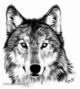 Wolf's Gaze by Spectrum-VII on DeviantArt