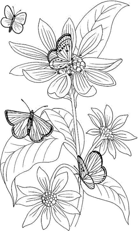 flower coloring pages for adults (With images) Butterfly