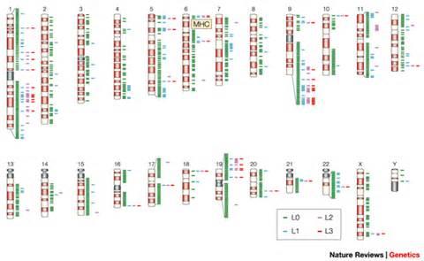 Human Genome Map