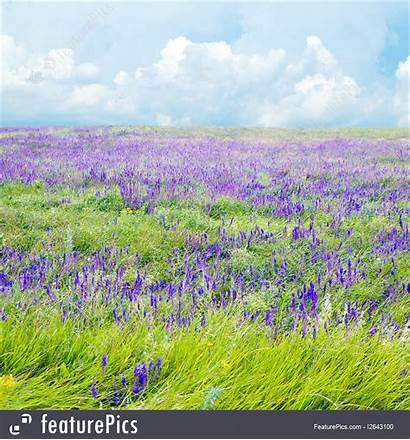 Steppe Flower Landscape Featurepics Violet