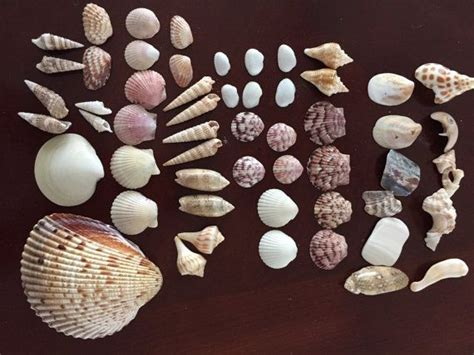 144 Best Tropical Sea Shell Beach Jewelry Images On Pinterest Brighton Jewelry Lubbock Tx Pouch Armoire White Wood Badge Holder Necklace Long Necklaces Lanyard Kenwood Mall Building Kits