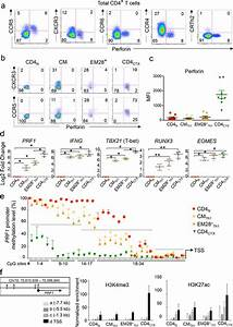 Figures and data in The transcription factors Runx3 and ...