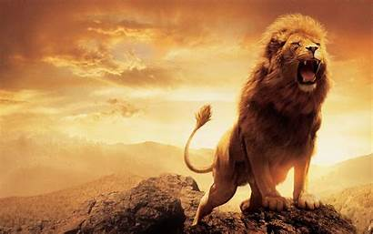 Lion Narnia Wallpapers Leon Desktop Backgrounds Movies