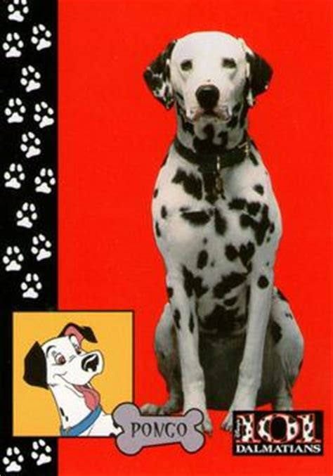 skybox  dalmatians  sport gallery