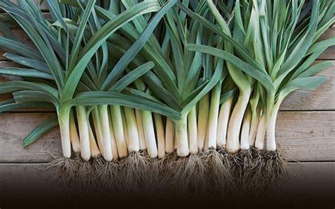 que planter en septembre 15 id 233 es 224 semer et 50 photos pour se r 233 galer archzine fr