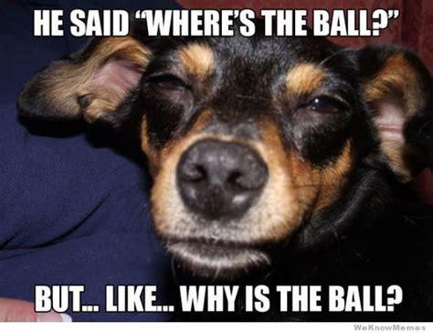 High Dog Meme - high dog memes