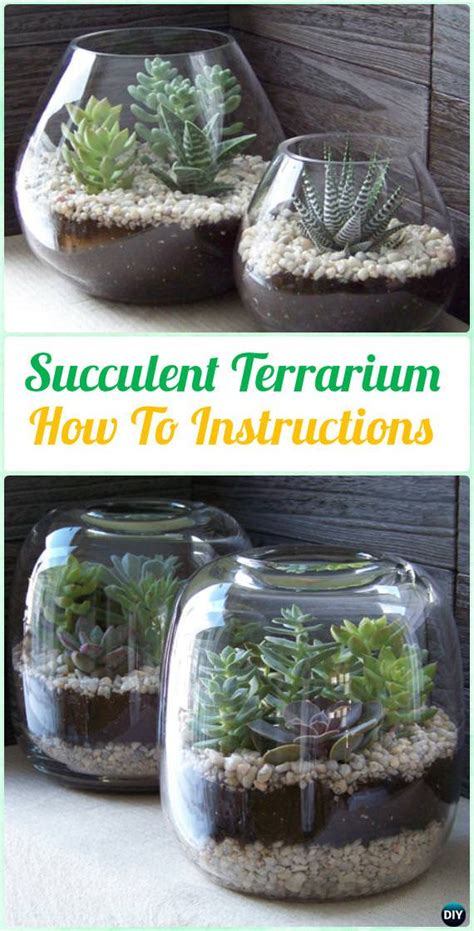 diy indoor outdoor succulent garden ideas thinkhom