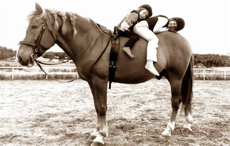 finnhorse loyal horse companion renny daughters cool
