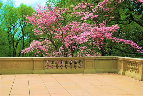 Primavera 4k Wallpapers by 2732082 3840x2571 4k Windows Background Wallpaper